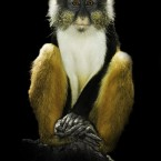 Dignity: Poise Guenon © Dr J Zammit-Lucia. All Rights Reserved